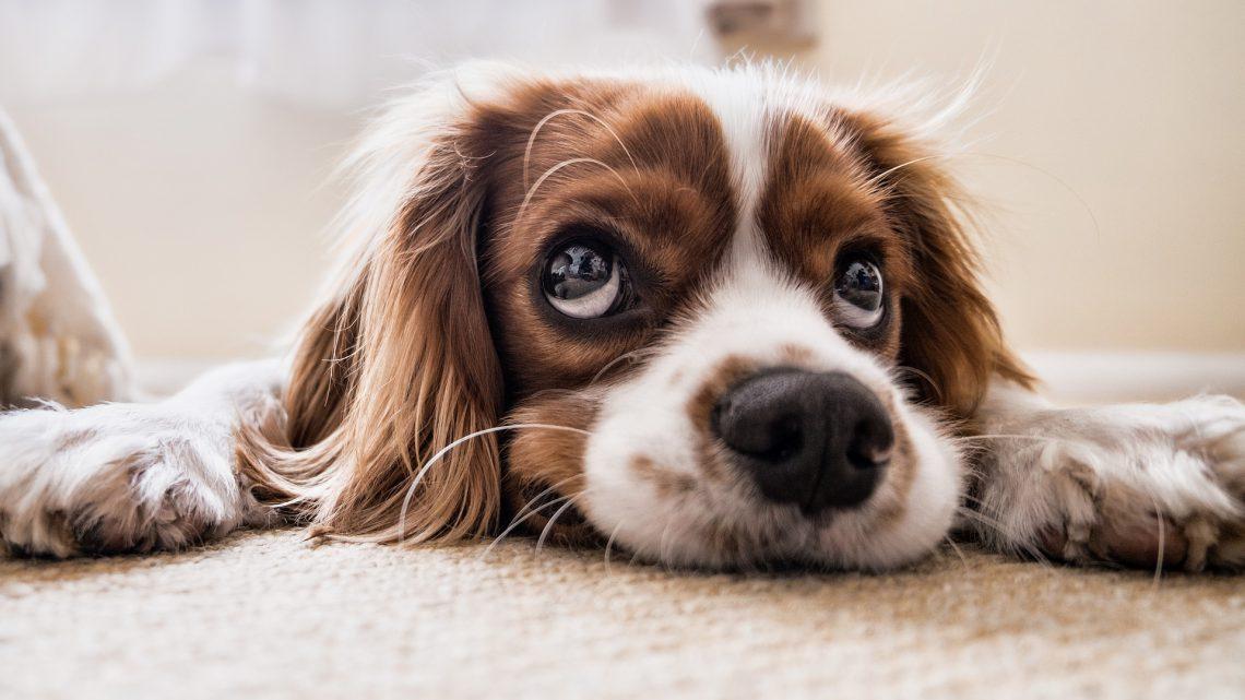 Wanneer trek je aan de bel voor je huisdier?