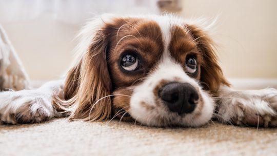 Hoe houdt je jouw hond gelukkig?